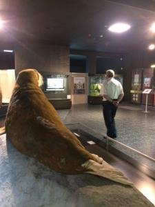 2017_sven_tode_kulturprogramm_zoologisches_museum3